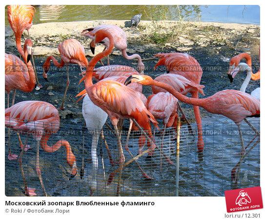 Московский зоопарк Влюбленные фламинго , фото № 12301, снято 24 сентября 2006 г. (c) Roki / Фотобанк Лори