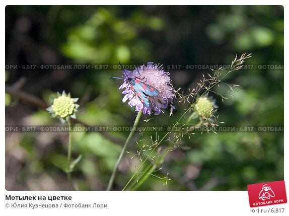 Мотылек на цветке, фото № 6817, снято 26 июля 2017 г. (c) Юлия Кузнецова / Фотобанк Лори