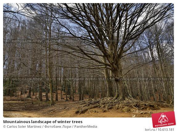 Mountainous landscape of winter trees. Стоковое фото, фотограф Carlos Soler Martinez / PantherMedia / Фотобанк Лори