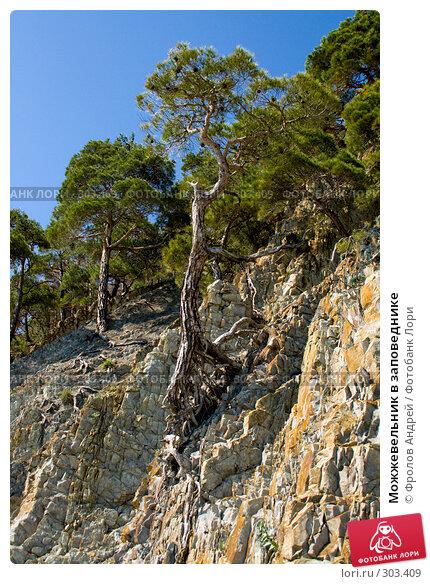 Можжевельник в заповеднике, фото № 303409, снято 18 мая 2008 г. (c) Фролов Андрей / Фотобанк Лори