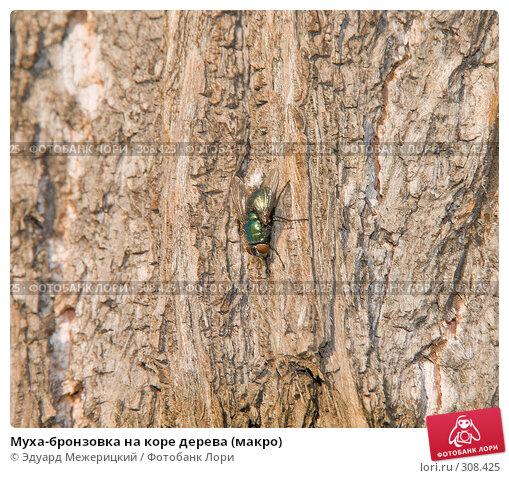 Муха-бронзовка на коре дерева (макро), фото № 308425, снято 12 мая 2008 г. (c) Эдуард Межерицкий / Фотобанк Лори