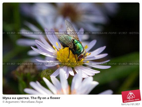 Муха на цветке. The fly on a flower, фото № 61957, снято 7 сентября 2006 г. (c) Argument / Фотобанк Лори