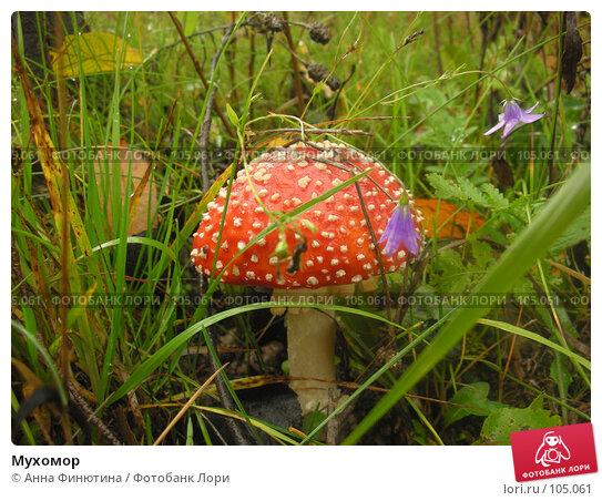 Мухомор, фото № 105061, снято 24 октября 2016 г. (c) Анна Финютина / Фотобанк Лори