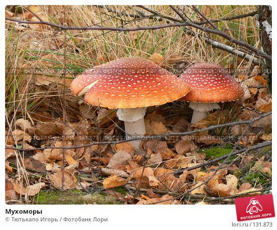 Купить «Мухоморы», фото № 131873, снято 14 октября 2007 г. (c) Тютькало Игорь / Фотобанк Лори