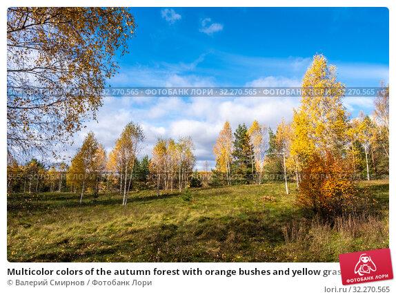 Купить «Multicolor colors of the autumn forest with orange bushes and yellow grass», фото № 32270565, снято 5 октября 2019 г. (c) Валерий Смирнов / Фотобанк Лори