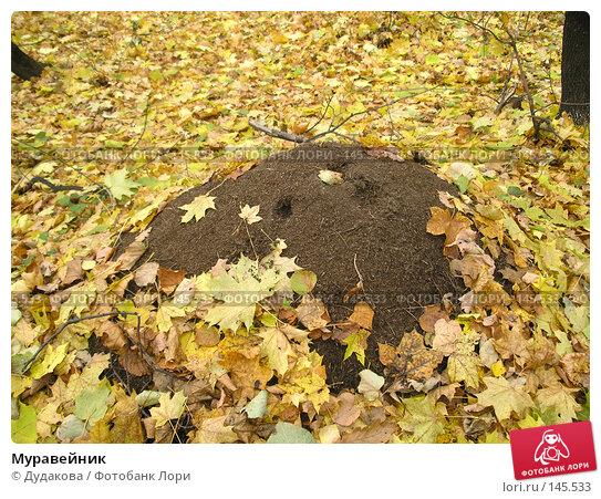 Муравейник, фото № 145533, снято 20 октября 2005 г. (c) Дудакова / Фотобанк Лори