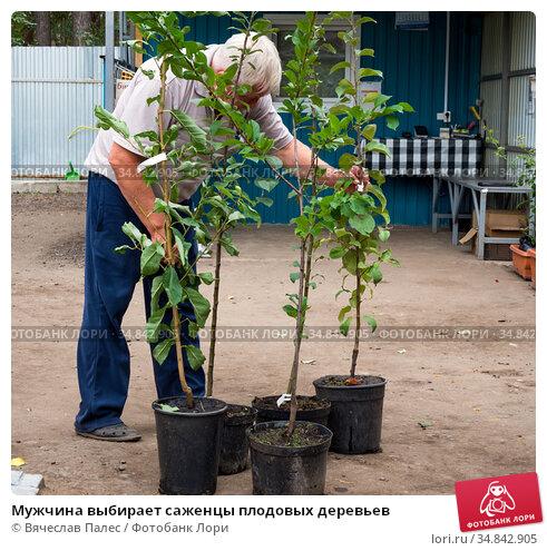 Мужчина выбирает саженцы плодовых деревьев (2019 год). Редакционное фото, фотограф Вячеслав Палес / Фотобанк Лори