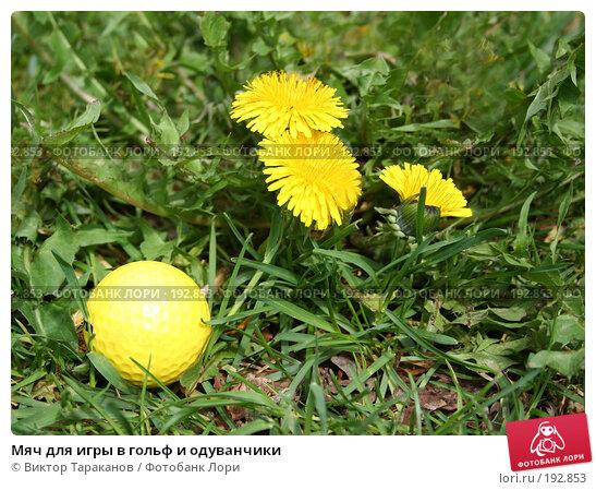 Мяч для игры в гольф и одуванчики, эксклюзивное фото № 192853, снято 31 мая 2006 г. (c) Виктор Тараканов / Фотобанк Лори