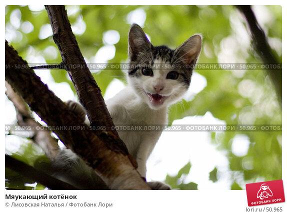 Купить «Мяукающий котёнок», фото № 50965, снято 19 июня 2006 г. (c) Лисовская Наталья / Фотобанк Лори
