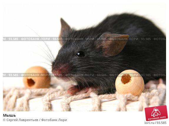 Мышь, фото № 93585, снято 23 сентября 2007 г. (c) Сергей Лаврентьев / Фотобанк Лори