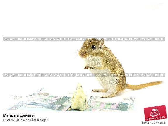 Мышь и деньги, фото № 255621, снято 18 апреля 2008 г. (c) ФЕДЛОГ.РФ / Фотобанк Лори