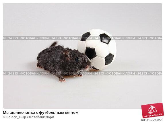 Мышь-песчанка с футбольным мячом, фото № 24853, снято 18 марта 2007 г. (c) Golden_Tulip / Фотобанк Лори