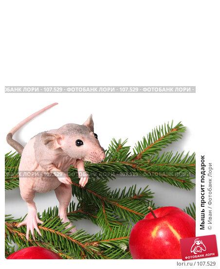 Купить «Мышь просит подарок», фото № 107529, снято 23 сентября 2007 г. (c) Иван / Фотобанк Лори