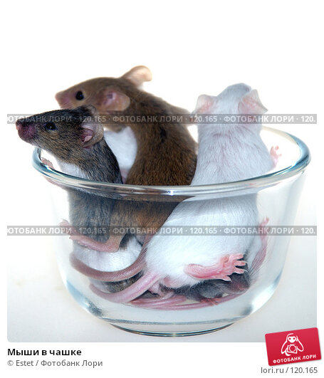 Мыши в чашке, фото № 120165, снято 28 марта 2017 г. (c) Estet / Фотобанк Лори