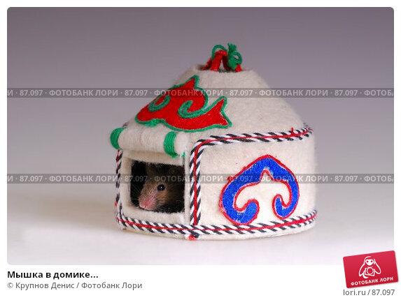 Мышка в домике..., фото № 87097, снято 23 августа 2007 г. (c) Крупнов Денис / Фотобанк Лори