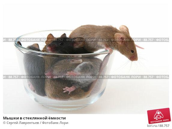 Мышки в стеклянной ёмкости, фото № 88757, снято 23 сентября 2007 г. (c) Сергей Лаврентьев / Фотобанк Лори