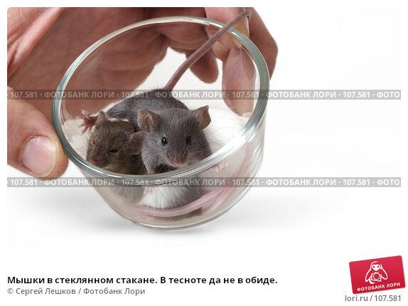 Мышки в стеклянном стакане. В тесноте да не в обиде., фото № 107581, снято 23 сентября 2007 г. (c) Сергей Лешков / Фотобанк Лори