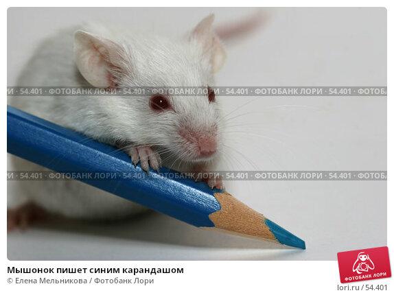Мышонок пишет синим карандашом, фото № 54401, снято 21 апреля 2007 г. (c) Елена Мельникова / Фотобанк Лори