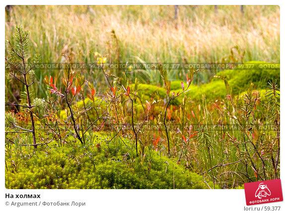 На холмах, фото № 59377, снято 10 сентября 2005 г. (c) Argument / Фотобанк Лори