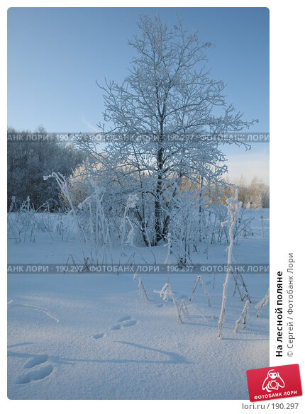 На лесной поляне, фото № 190297, снято 9 января 2008 г. (c) Сергей / Фотобанк Лори