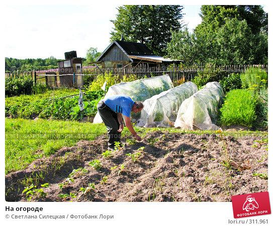 На огороде, фото № 311961, снято 21 июля 2007 г. (c) Светлана Силецкая / Фотобанк Лори