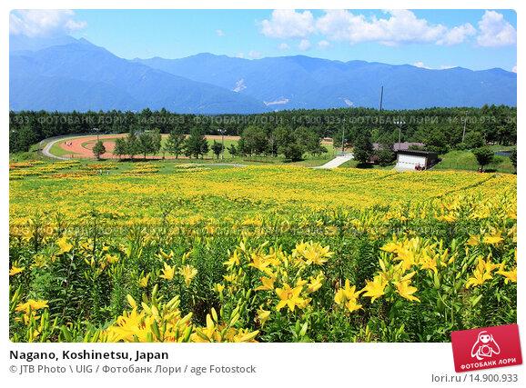 Купить «Nagano, Koshinetsu, Japan», фото № 14900933, снято 19 июня 2018 г. (c) age Fotostock / Фотобанк Лори