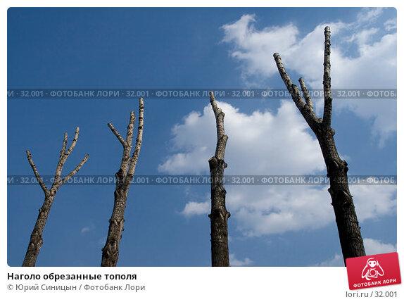 Наголо обрезанные тополя, фото № 32001, снято 31 марта 2007 г. (c) Юрий Синицын / Фотобанк Лори