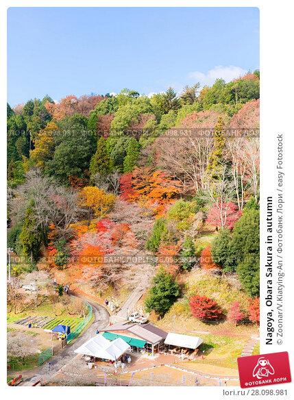 Купить «Nagoya, Obara Sakura in autumn», фото № 28098981, снято 15 июня 2019 г. (c) easy Fotostock / Фотобанк Лори