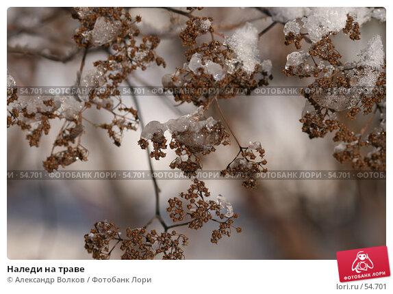 Наледи на траве, фото № 54701, снято 16 февраля 2007 г. (c) Александр Волков / Фотобанк Лори