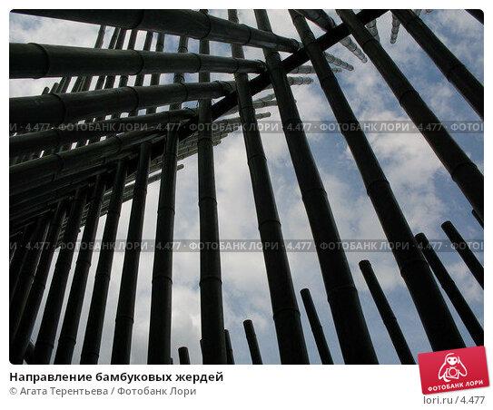 Направление бамбуковых жердей, фото № 4477, снято 21 мая 2006 г. (c) Агата Терентьева / Фотобанк Лори