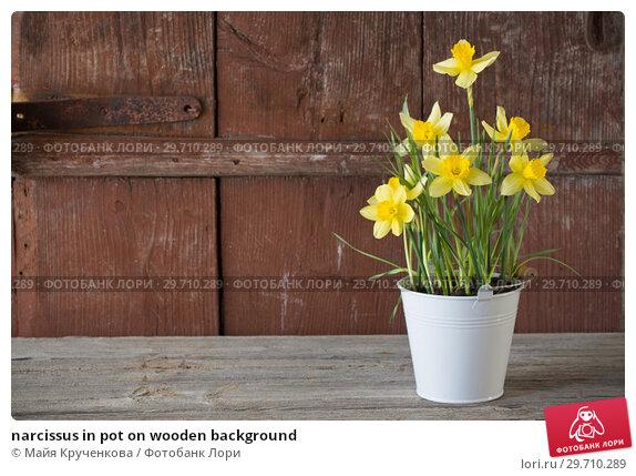 Купить «narcissus in pot on wooden background», фото № 29710289, снято 23 апреля 2018 г. (c) Майя Крученкова / Фотобанк Лори