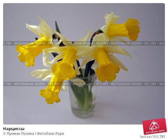Нарциссы, фото № 311781, снято 12 апреля 2008 г. (c) Примак Полина / Фотобанк Лори