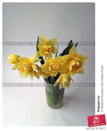 Купить «Нарциссы», фото № 311817, снято 14 апреля 2008 г. (c) Примак Полина / Фотобанк Лори