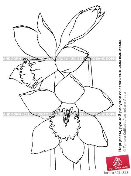 Купить «Нарциссы, ручной рисунок со сглаженными линиями», иллюстрация № 231513 (c) Tamara Kulikova / Фотобанк Лори