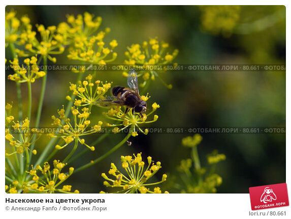 Насекомое на цветке укропа, фото № 80661, снято 9 августа 2007 г. (c) Александр Fanfo / Фотобанк Лори