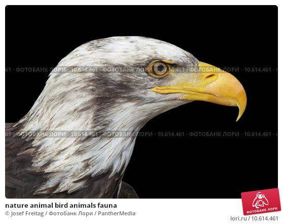 nature animal bird animals fauna. Стоковое фото, фотограф Josef Freitag / PantherMedia / Фотобанк Лори