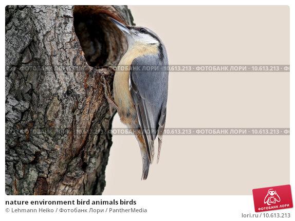 nature environment bird animals birds. Стоковое фото, фотограф Lehmann Heiko / PantherMedia / Фотобанк Лори