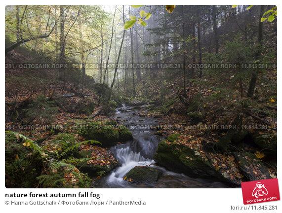 Купить «nature forest autumn fall fog», фото № 11845281, снято 24 августа 2019 г. (c) PantherMedia / Фотобанк Лори