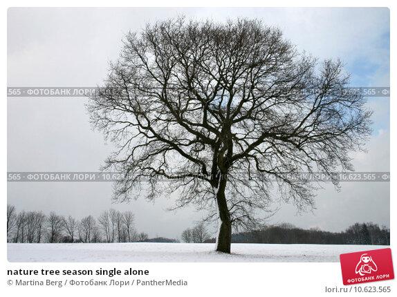nature tree season single alone. Стоковое фото, фотограф Martina Berg / PantherMedia / Фотобанк Лори
