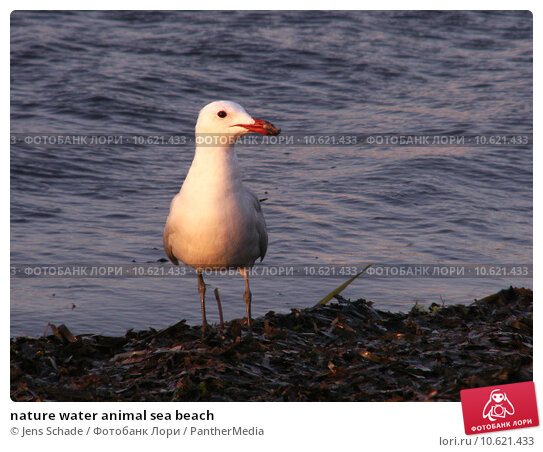 nature water animal sea beach. Стоковое фото, фотограф Jens Schade / PantherMedia / Фотобанк Лори