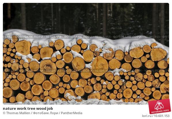 nature work tree wood job. Стоковое фото, фотограф Thomas Mallien / PantherMedia / Фотобанк Лори