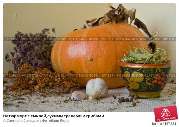 Купить «Натюрморт с тыквой,сухими травами и грибами», фото № 157881, снято 24 декабря 2007 г. (c) Светлана Силецкая / Фотобанк Лори