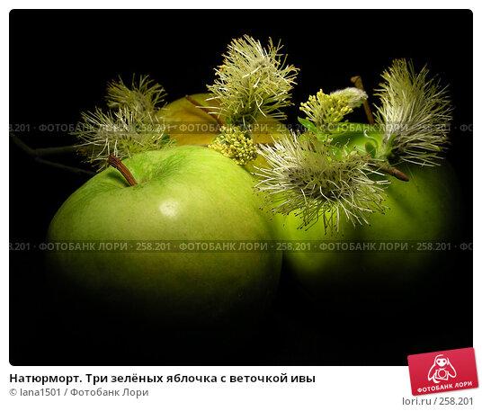 Натюрморт. Три зелёных яблочка с веточкой ивы, эксклюзивное фото № 258201, снято 16 апреля 2008 г. (c) lana1501 / Фотобанк Лори