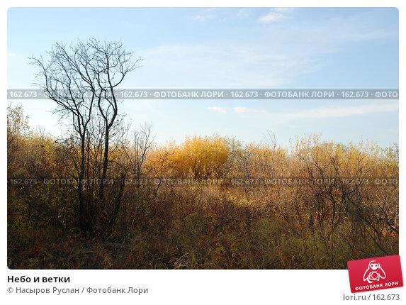 Небо и ветки, фото № 162673, снято 5 октября 2007 г. (c) Насыров Руслан / Фотобанк Лори