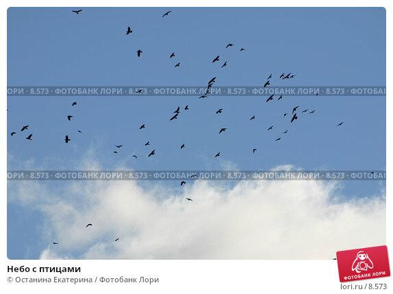 Купить «Небо с птицами», фото № 8573, снято 25 сентября 2005 г. (c) Останина Екатерина / Фотобанк Лори