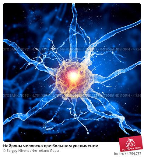 Купить «Нейроны человека при большом увеличении», фото № 4754757, снято 23 февраля 2019 г. (c) Sergey Nivens / Фотобанк Лори