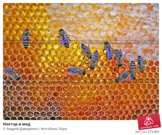 Нектар и мед, фото № 273401, снято 14 июля 2007 г. (c) Андрей Давиденко / Фотобанк Лори