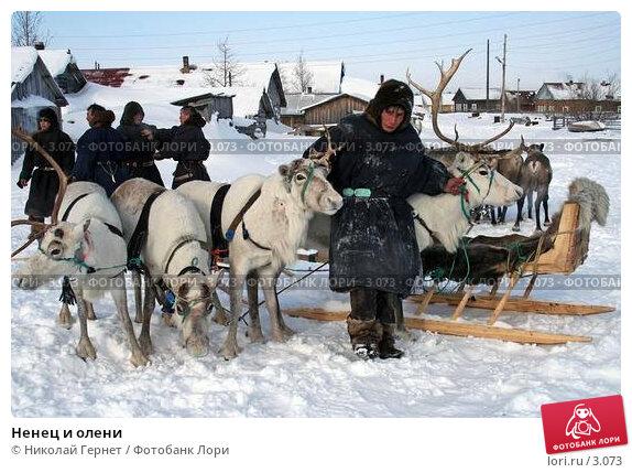 Ненец и олени, фото № 3073, снято 25 марта 2006 г. (c) Николай Гернет / Фотобанк Лори