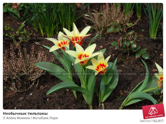 Купить «Необычные тюльпаны», фото № 162817, снято 2 апреля 2006 г. (c) Алёна Фомина / Фотобанк Лори