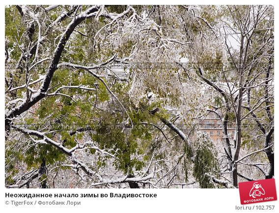 Неожиданное начало зимы во Владивостоке, фото № 102757, снято 28 мая 2017 г. (c) TigerFox / Фотобанк Лори